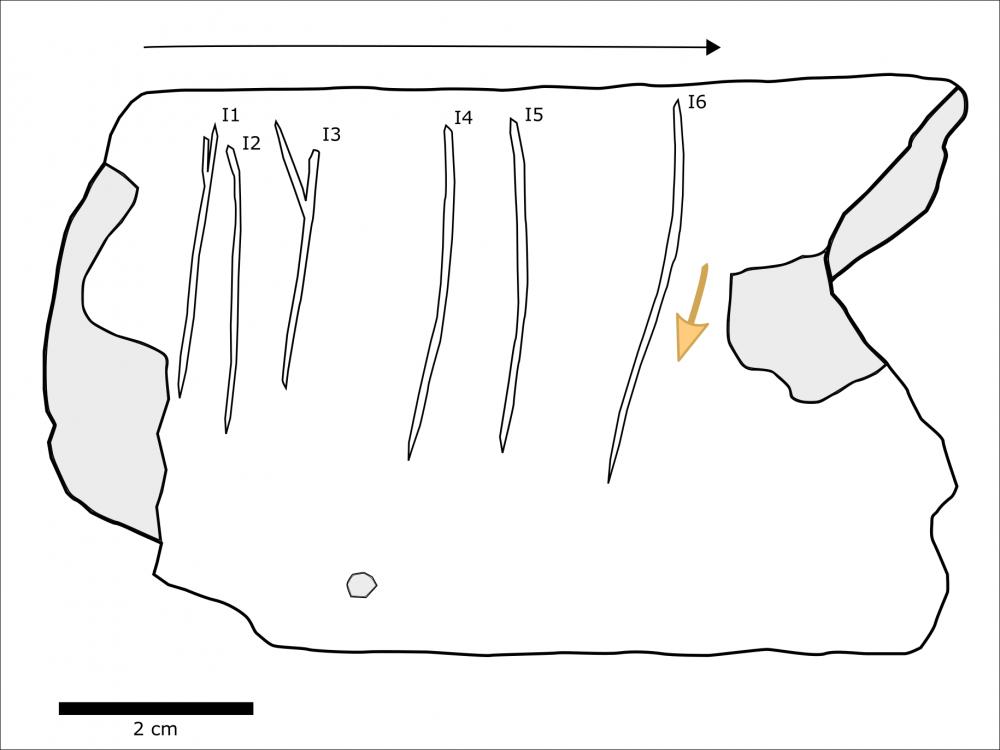 איור של החריטות על גבי העצם. קרדיט: מריון פרוו.