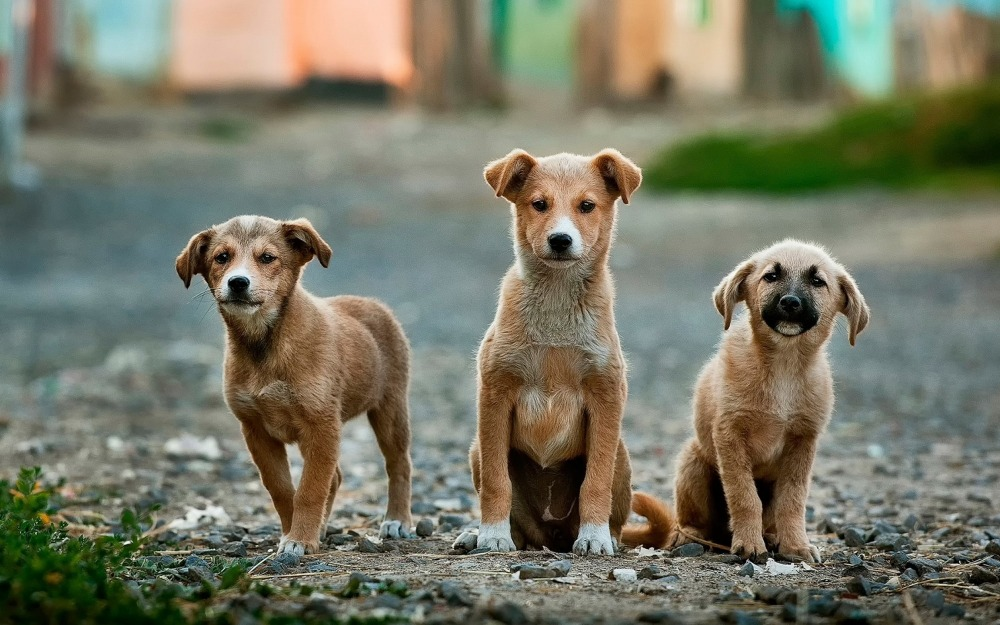 dogs. by Anoir Chafik UNSPLASH