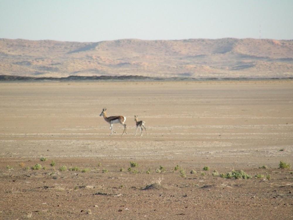 מדבר הקלהרי נמצא באגן יבשתי פנימי בחלקה הדרומי של אפריקה, ומכוסה בשמיכת החול הגדולה בעולם. צילום - ארי מטמון