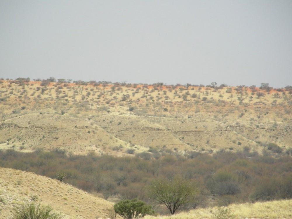 משקעי חול במדבר הקלהרי שבנמיביה. מטרת המחקר הייתה לתארך את הופעתם הראשונית בנוף כדי להבין את התזמון של תהליכי יצירת המדבר. צילום - שלומי ויינר