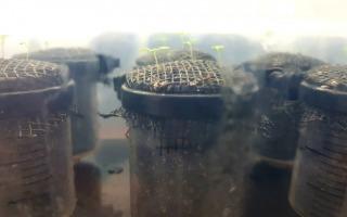 הצמחים שנחקרו. צילום - דר קונור פיצפאטריק