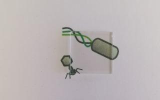 משטח הזכוכית המצופה על גבי תמונה של וירוסים - מציג את השקיפות מלאה. באדיבות דוברות האוניברסיטה העברית