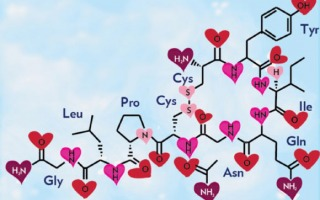 stylized molecule of oxytocin