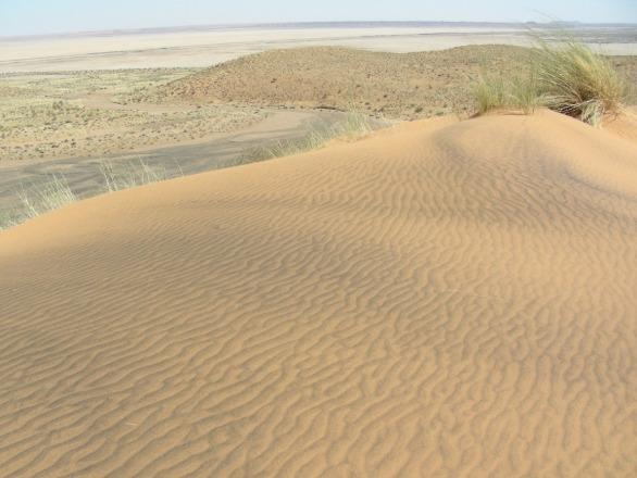 בתמונה: חולות נודדים במדבר הקלהרי שבדרום אפריקה. מדידות ריכוזי האיזוטופים הקוסמוגניים המצטברים בהם מאפשרים לתארך את הופעתם בנוף. צילום - ארי מטמון