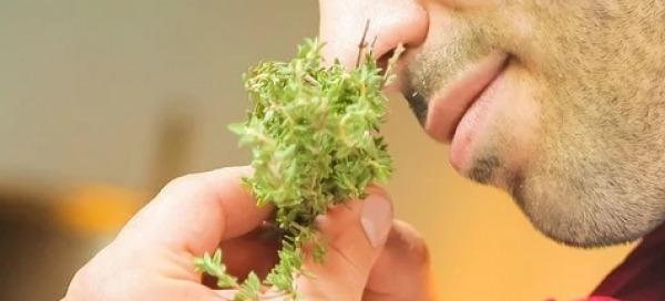 גבר מריח עשבים