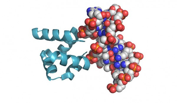The characteristic (HhH)2 fold and its binding to the minor groove of a modern DNA molecule. How did the first ones form?